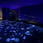 すみだ水族館🐠🌖  狭いのかと思いきや中は広々してて、 魚たちに癒されます✨ クラゲが綺麗だったな〜