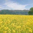 📍長野県 | 飯山  ✈︎ 2018.05  [ 飯 山 菜 の 花 公 園 ]  山々と辺り一面の菜の花が見れる絶景スポット📸 天気にも恵まれ、感動的な景色が見れました。