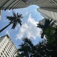 #DusitSuitesHotelRatchadamriBangkok プールフロアからホテルを見上げた #Bangkok #Thailand