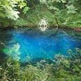 肉眼だと池の底まで見えるほどに透き通っていて、インクを垂らしたかのように鮮やかで澄んだブルーの青池。白神山地にある十二湖の一つです。  #青池 #青森 #十二湖