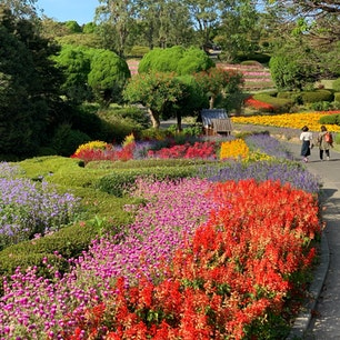 能古島アイランドパーク  お花畑💐