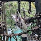 祖谷のかずら橋(令和2年) 2020年10月14時の写真ですね。   #四国 #全国橋巡り #サント船長の写真
