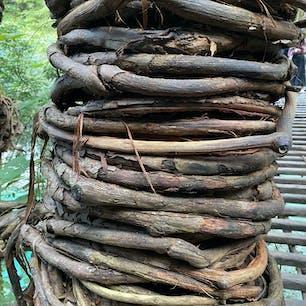祖谷のかずら橋(令和) 20年前と同じ柱ですね、随分と巻き付けたものですね^_^  #四国 #全国橋巡り #サント船長の写真