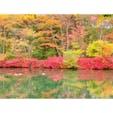 日帰り軽井沢旅行🍁  【雲場池】へ行ってきました‼︎