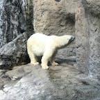 #旭山動物園