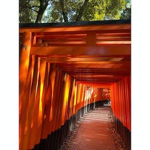 伏見稲荷神社  #鳥居
