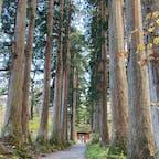戸隠神社奥社の参道⛩ 随神門の前にいる人と比べると杉の木の大きさが伝わるでしょうか。この杉の大木がしばらくずら〜っと並んでいて、壮観です。
