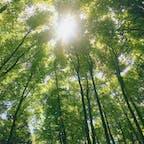 📍長野県 | 飯山  ✈︎ 2018.04  [ な べ く ら 高 原 ]  日本有数の豪雪地帯でもある、 なべくら高原一帯に広がるブナの森🌿 新緑の時期で、天気も良く、 木漏れ日の中のトレッキングは とっても気持ちよかった🥺💕