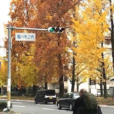 京都銀杏並木  堀川通のイチョウ並木は堀川寺の内辺りから、中央分離帯を歩くとよいでしょう。上から堀川通のイチョウ並木を眺めるのなら、歩道橋からが美しく見えます。カーブに沿って並ぶイチョウ並木が最高ですね♪  #京都 #銀杏 #サント船長の写真 #紅葉