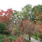 箱根湿生花園の中で見つけた、小さい秋。
