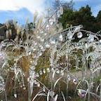 箱根ガラスの森美術館は、庭にも作品が多数あって楽しめます。ガラスが日光に当たってキラキラ輝いて、綺麗ですよ。