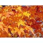 軽井沢で紅葉狩り🍁