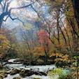 奥入瀬渓流 紅葉🍁
