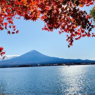 📍山梨県  ✈︎ 2020.11  [ 河 口 湖 ]  もみじと富士山と河口湖。 快晴で湖面がきらっきら😭✨ 湖沿いのもみじは所々真っ赤に染まってきていて、遊歩道の上からこの写真が撮れました📸