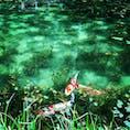 岐阜県にあるモネの池
