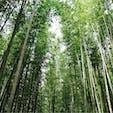 2020/03 #京都 #嵐山 #竹林の道