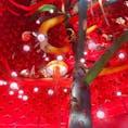 📍Osaka,Japan  #大阪 #万博記念公園 #太陽の塔