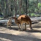 カランビン・ワイルドライフ自然保護区 (Currumbin Wildlife Sanctuary) 🇦🇺
