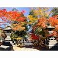 四柱神社 紅葉がすごく綺麗でした
