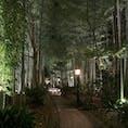 竹林 #修善寺