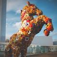 03/11/20 @十和田市現代美術館 #Flower #東北旅日記