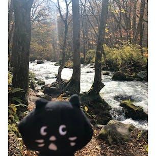 04/11/20 @奥入瀬渓流 ♯木と鳥とせせらぎと。 #にゃーと旅日記