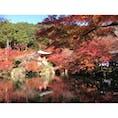 《京都》 醍醐寺 紅葉  2016.11