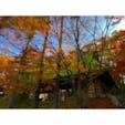 ゆのくにの森は、紅葉真っ盛り!苔の屋根の紅葉のコントラストが綺麗でした。  #石川