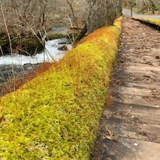 奥入瀬渓流を散歩 コケ達いっぱい いろんな種類があるのね