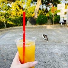 千光寺山ロープウェイのぼったところではっさくジュースを飲みました。苦かった。