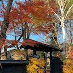 秋田 角館 武家屋敷通り 紅葉がまだまだ綺麗