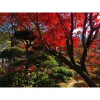 山中温泉にある松尾芭蕉記念館の庭。  #石川