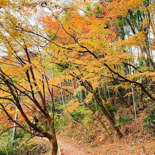 駐車場から月待の滝までの道、竹林の緑を背景に紅葉の色合いがとっても引き立ってました🍁