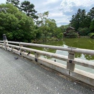 京都御所一條家の大橋 此の橋は一條家の池に架かる橋で、大きな屋敷ですね😰 ですから色々と伝説話しも出来ます。   #京都  #全国橋巡り #サント芹沢鴨の写真 #伝説話し