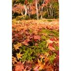 #祇王寺 #嵐山 #京都 #gioji #arashiyama #Kyoto 苔の上に紅葉の絨毯🍁 2020.11.20.fri.