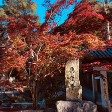 興聖寺 美しい紅葉の「琴坂」曹洞宗の名刹  1648年に永井尚政によって宇治の地に再興された寺院。琴坂は、カエデの紅葉の名所として人気だが、春などの新緑の時期など、四季を通じて季節感を味わうことができ、美しい日本の古き良き風景を楽しむことができる。  #京都 #神社仏閣 #サント芹沢鴨の写真 #紅葉