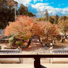 興聖寺 美しい紅葉の「琴坂」曹洞宗の名刹 竜宮門の二階から撮影しました😃  #京都 #神社仏閣 #サント芹沢鴨の写真 #絶景ポイント #紅葉