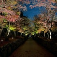 興聖寺 美しい紅葉の「琴坂」が人気の曹洞宗の名刹  #京都 #ライトアップ #神社仏閣 #サント芹沢鴨の写真 #紅葉