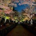 興聖寺 美しい紅葉の「琴坂」が人気の曹洞宗の名刹  #京都 #ライトアップ #神社仏閣 #サント船長の写真 #紅葉