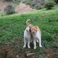 キプロス トロードス山中にいた仔猫の兄弟 どこから来たの?