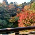 東福寺 (通天橋)   #京都 #神社仏閣 #サント芹沢鴨の写真 #紅葉