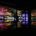 〰️Shiga🍁〰️ #滋賀#旧竹林院#旧竹林院ライトアップ
