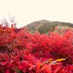 光悦寺 (鷹ヶ峰)  鷹ヶ峰  #京都 #神社仏閣 #サント芹沢鴨の写真 #紅葉