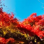 光悦寺 (鷹ヶ峰)  #京都 #神社仏閣 #サント船長の写真 #紅葉
