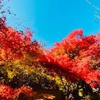 光悦寺 (鷹ヶ峰)  #京都 #神社仏閣 #サント芹沢鴨の写真 #紅葉