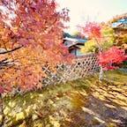 光悦寺 (鷹ヶ峰)  光悦垣  #京都 #神社仏閣 #サント芹沢鴨の写真 #紅葉
