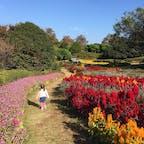 #福岡県 #能古島 #のこのしまアイランドパーク #2歳子連れ #週末旅 #BBQ #ランチ #フェリー #コスモス 2020.11月