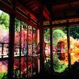 紅葉の時期に佐賀県にある環境芸術の森で撮影しました😊 机に反射する紅葉が幻想的です😄