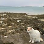 奥武島で猫ちゃんに案内してもらったの〜😍 ずっと付いてきてくれた、、、可愛い、、
