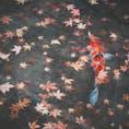 #永観堂禅林寺 #京都 2020年12月  中庭の池、紅葉越しの鯉🍁